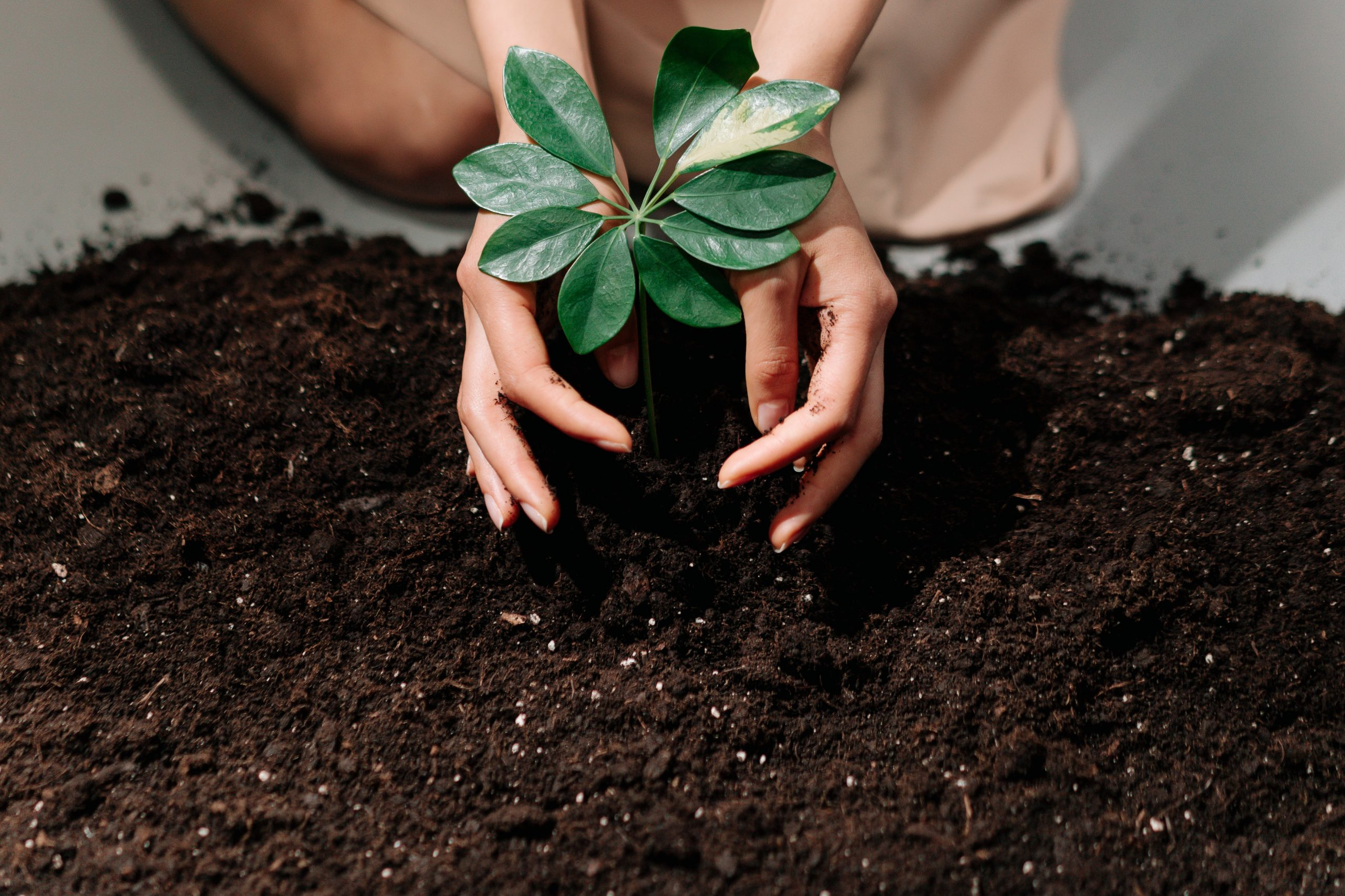 lady with plant in soil